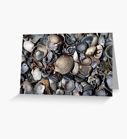Shells. II Greeting Card