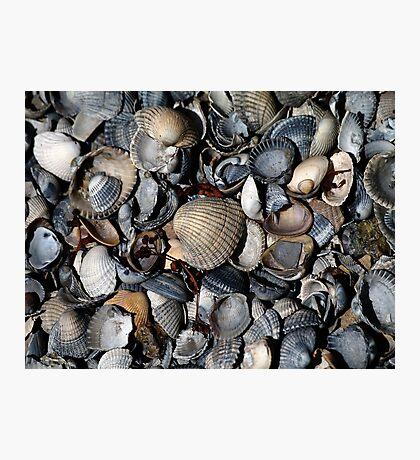 Shells. II Photographic Print