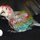 Macaw 7 Weeks by Goldenspirit