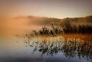 Loch Ard .. reeds, mist and morning sunlight.. by David Mould