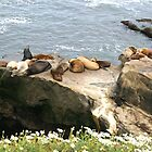 Seals in the California Sunshine  by Heather Friedman