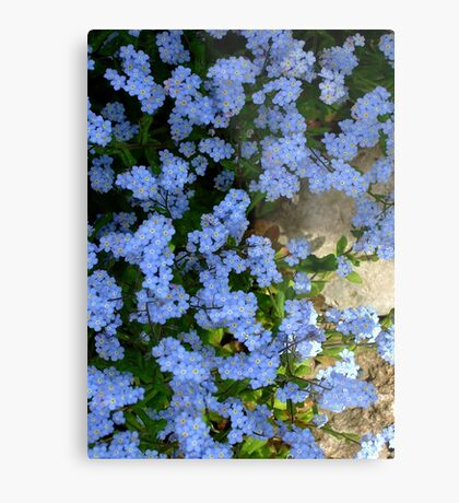 Forget me not. II Metal Print