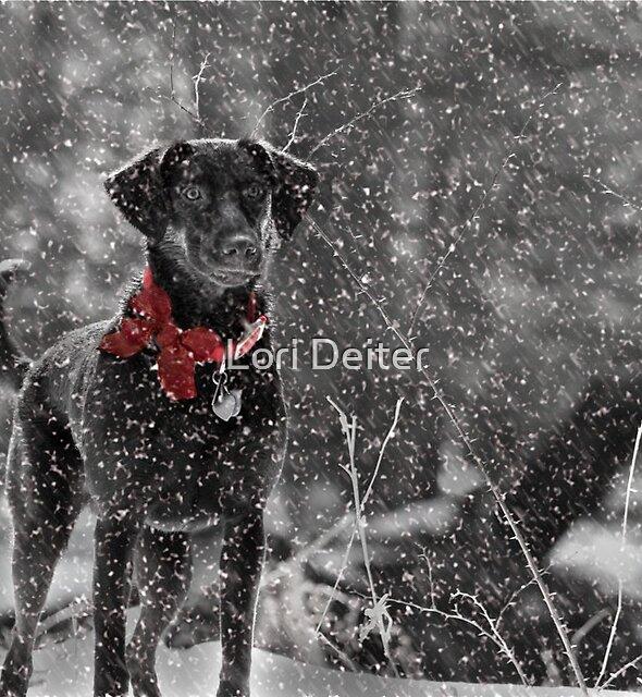 Dashing Through the Snow... by Lori Deiter