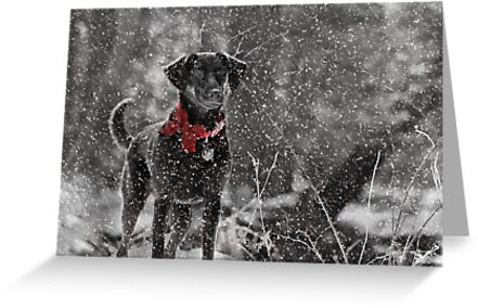 Dashing Through the Snow... by Lori Deiter