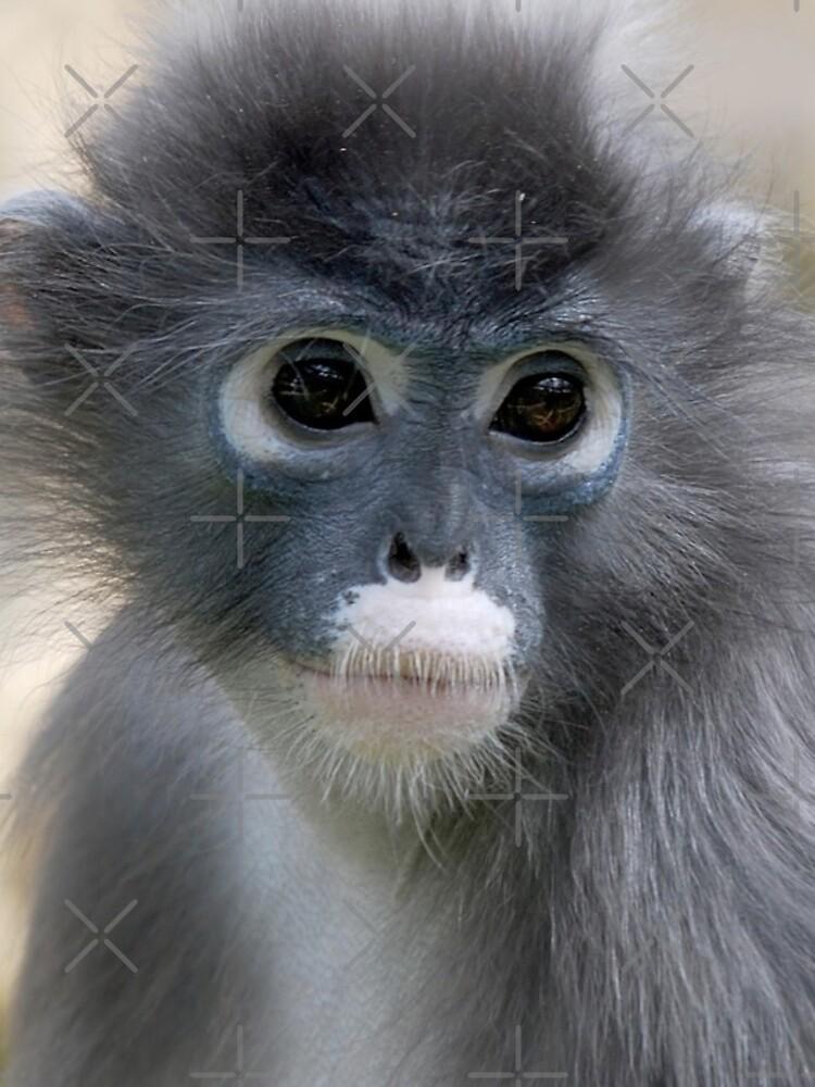 Dusky Leaf Monkey - (Trachypithecus obscurus) by senninha