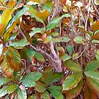 New Autumn Leaves by Looly Elzayat