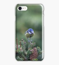 Perched on a pine tree iPhone Case/Skin