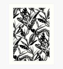 Black and White Strelitzia Art Print