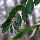 Icy Rain in NC #1 by Lolabud
