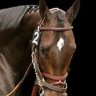 "Thoroughbred Champion ""Pioneer of the Nile"" by caqphotography"