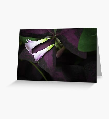 Lay Down Beside Me Greeting Card
