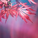 Red Leaves and Blur... by Catherine MacBride