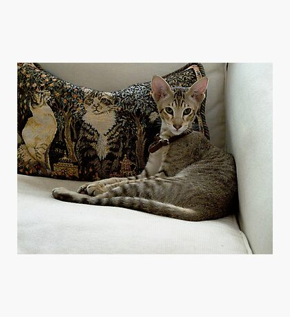 Rollo and his cushion friends Photographic Print
