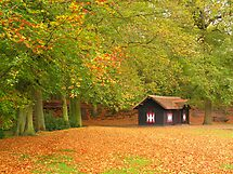 Autumn in the park by roumen