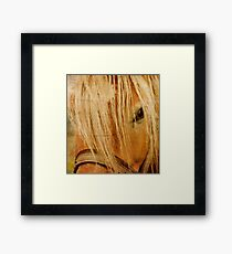Golden Horse Framed Print
