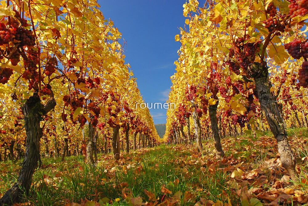 Autumn in the vineyard by roumen