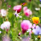 Colourful Wild Flowers by Leon Woods