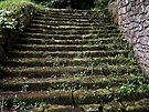 The Chillingham Steps by Ryan Davison Crisp