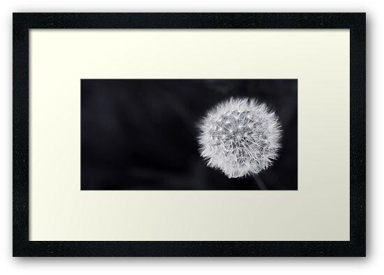 Dandelion by Man kit Wong