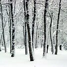 Snowy Day by Jessica Manelis