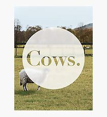 Cows. Photographic Print