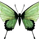 Green butterfly by Lucinda Kidney