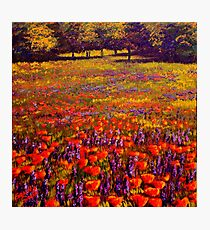 Sonoma Spring Meadow Photographic Print