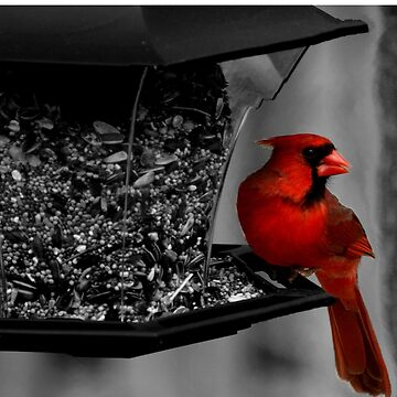 Cardinal at the feeder. by rsobiera
