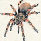 Mexican Red Knee Tarantula Tee by Pete Janes