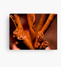 Cinnamon  Swirl Canvas Print