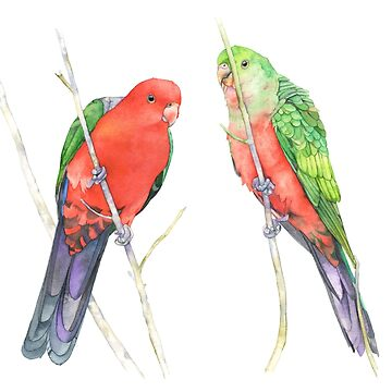 King Parrots by Louisedemasi