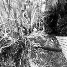 Trail of Dead. by alexollier