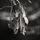 Wooden Leaves by Claire Walsh