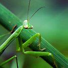 Praying mantis by LoreLeft27