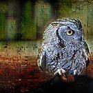Western Screech Owl by Barbara Manis