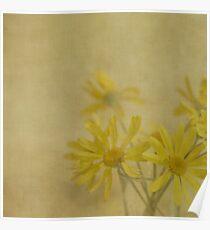 Golden Daisies Poster