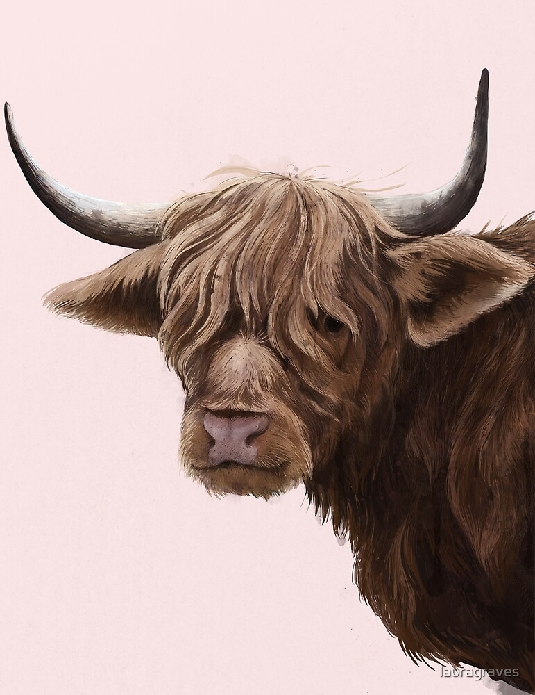 highland cattle portrait  by lauragraves
