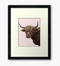 highland cattle portrait  Framed Print