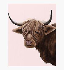 highland cattle portrait  Photographic Print