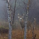 White-tailed buck in fog by Jim Cumming