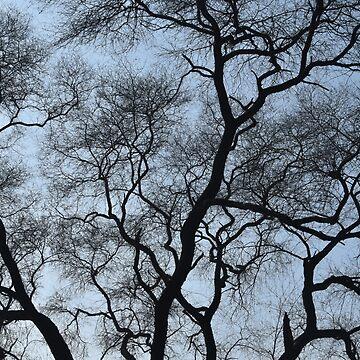Tree in Winter by AravindTeki