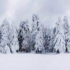 snowy fir by 1STunningART