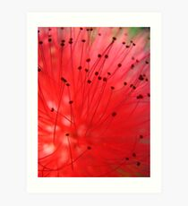 Intricate details of a red flower Art Print