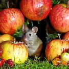 wild  house mouse and  apples by Simon-dell