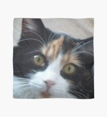 Puce chatte calicot Foulard