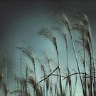 Light Breeze by JOSEPHMAZZUCCO