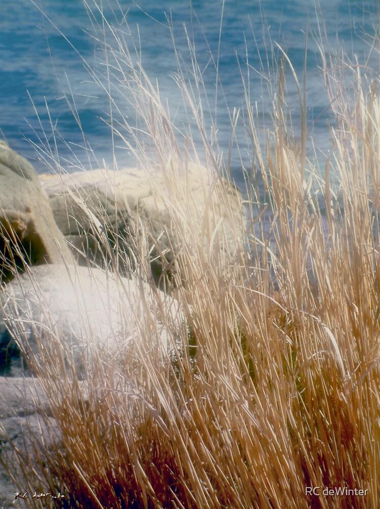 Rapunzel Reeds by RC deWinter