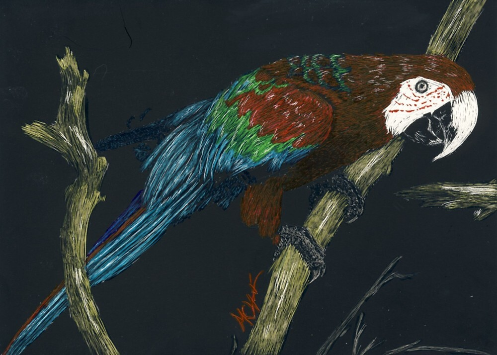 Parrot 1 by akaikatsugan