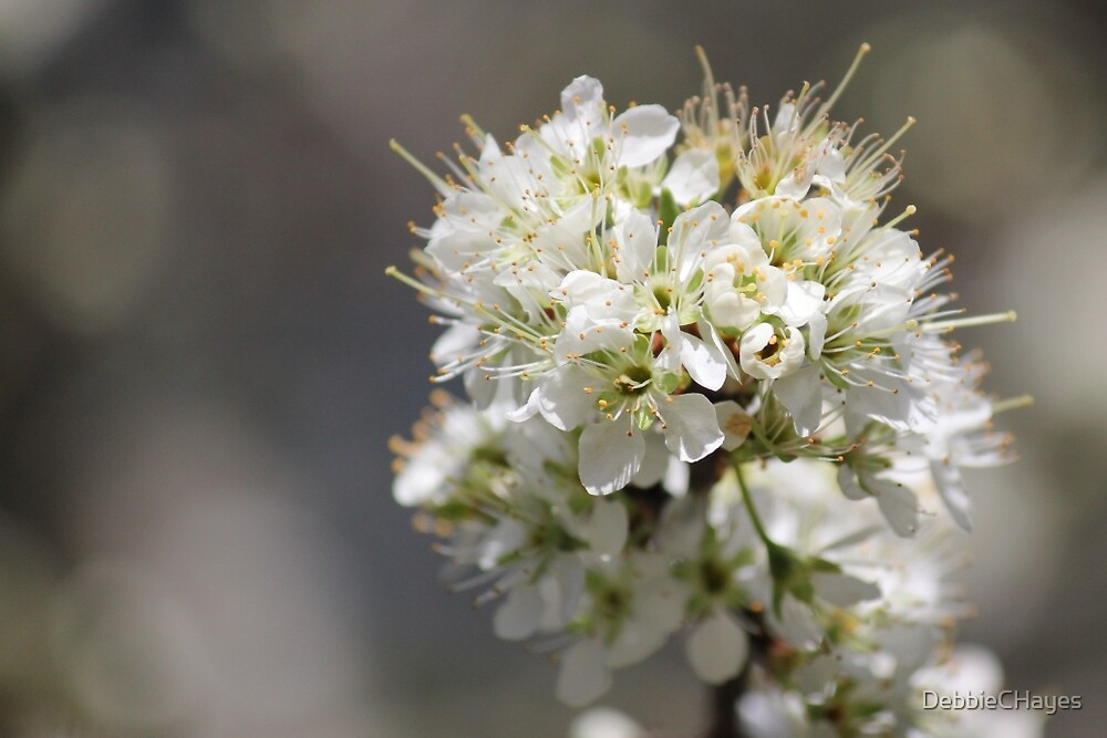Plum Tree Blossoms by DebbieCHayes