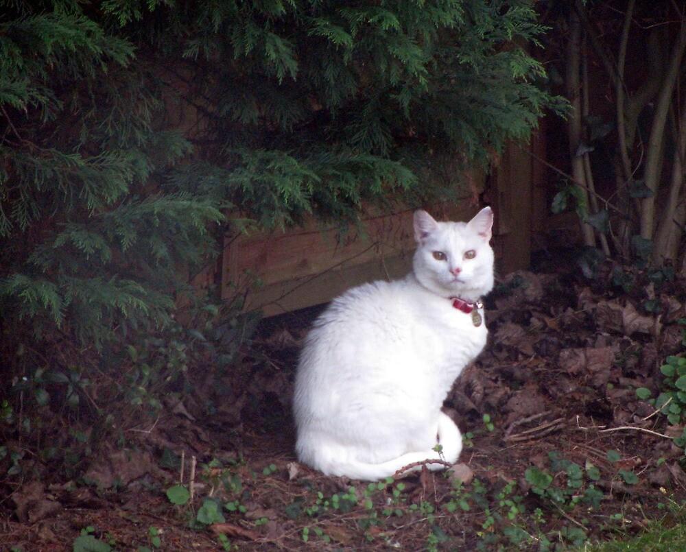Casper in the garden by Caroline Anderson